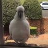 Голодный попугай отомстил за то, что его не покормили
