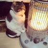 Кот, влюбившийся в обогреватель, очень веселит своего владельца
