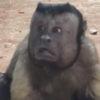 Странная обезьяна с человеческим лицом веселит посетителей зоопарка