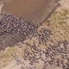 Уфолог обнаружил на Марсе целую экосистему, населённую стадами животных