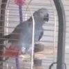 Талантливый попугай стал причиной ложного вызова пожарных