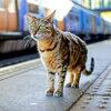 Дружелюбный кот стал начальником по работе с клиентами